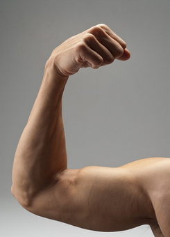 musculation biceps court