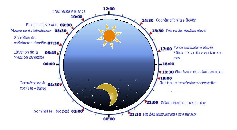 chrononutrition horloge bio