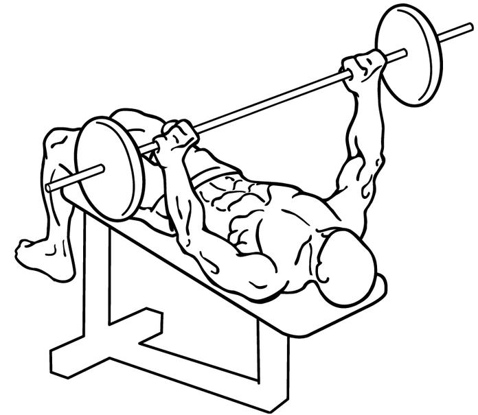 muscle développé couché