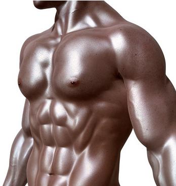 muscles abdos pectoraux