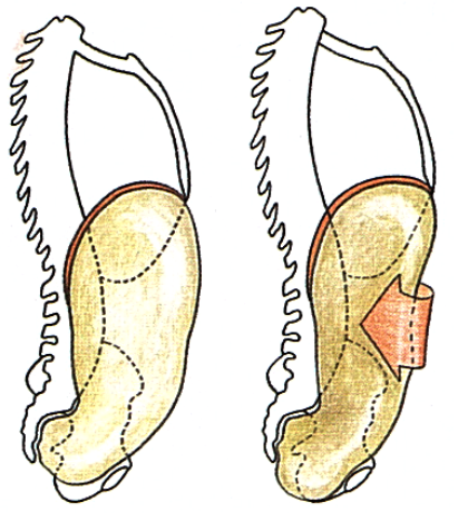 pilates abdomen