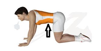 pilates exercice transverse