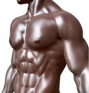 résultats muscle