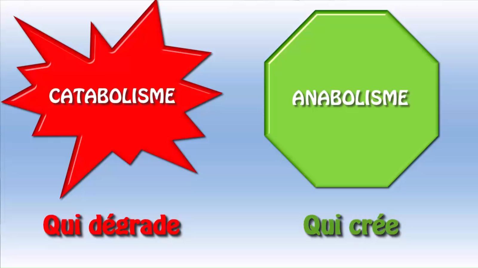 Métabolisme catabolisme anabolisme