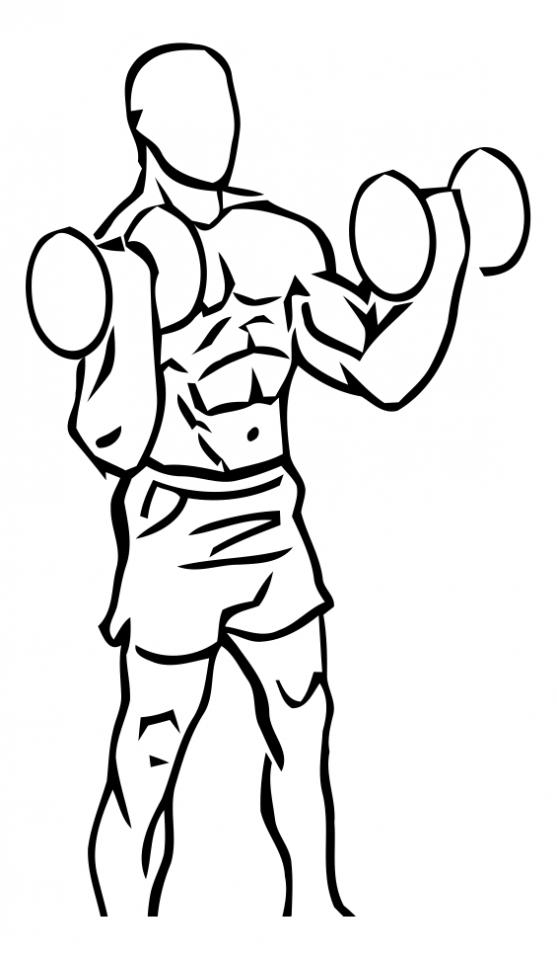 curl-biceps-halteres-gif-kscoaching